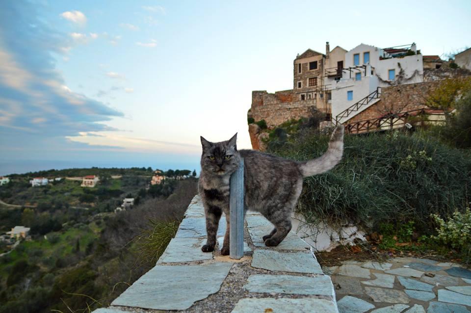 Γάτος στο Παλιό Χωριό
